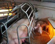 Компания Монокристалл предлагает плёночные инфракрасные тёплые полы