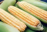 Продам кукурудзу замороженую,  сахарную,  суперсладкую в початках,  чищен