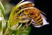 Видеопасека 1-2 мир пчеловода