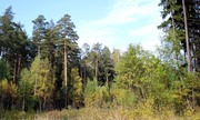 Продам участок в сосновом лесу