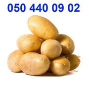картофель семенной посадочный для Вас