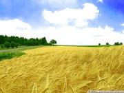 Купим сельхозпредприятие в Черкасской области
