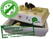 Инкубаторы для яиц птиц или рептилий