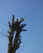 Зрізання,  валка,  обрiзка,  видалення,  спилювання вирубка дерев.