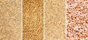 Куплю зерно,  зерноотходы,  некондицию