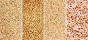 Куплю зерно,  Зерновідходи,  некондицію